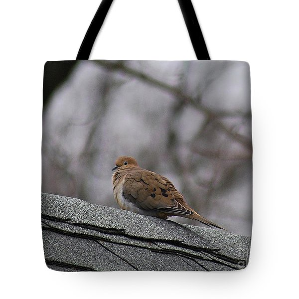 Mourning Dove 20120318_1a Tote Bag by Tina Hopkins