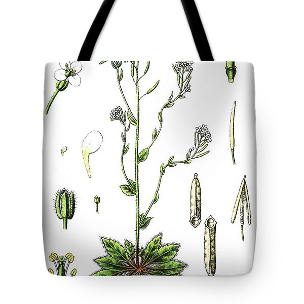 Mouse-ear Cress Or Arabidopsis Tote Bag