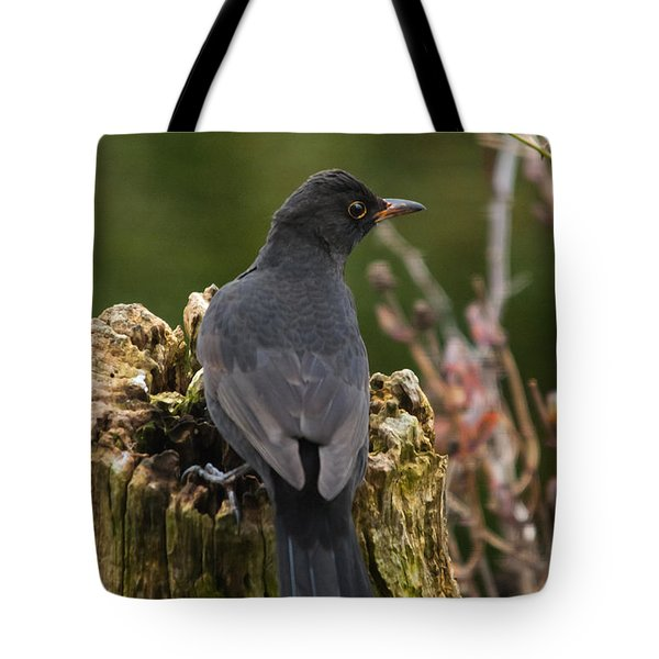Mr Birdy Tote Bag