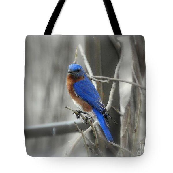 Tote Bag featuring the photograph Mr. Bluebird by Brenda Bostic