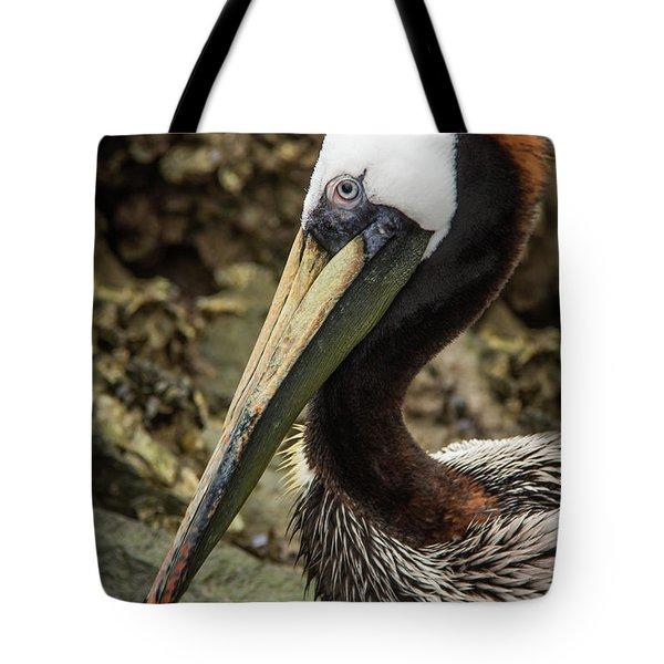 Mr. Cool Wildlife Art By Kaylyn Franks Tote Bag