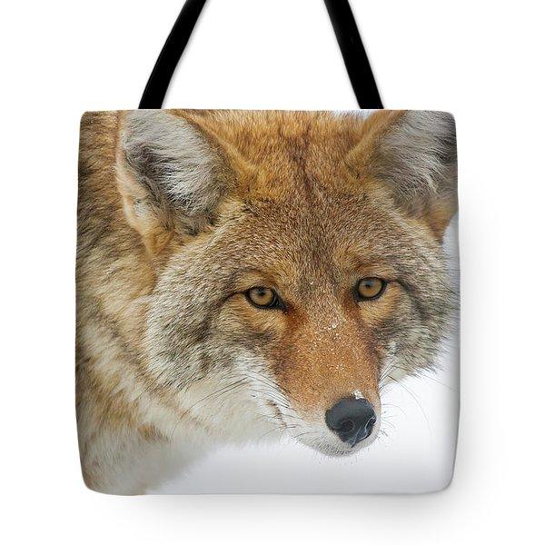 Mr. Coyote Tote Bag
