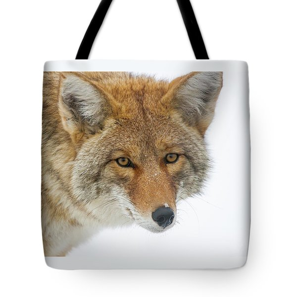 Mr. Coyote Tote Bag