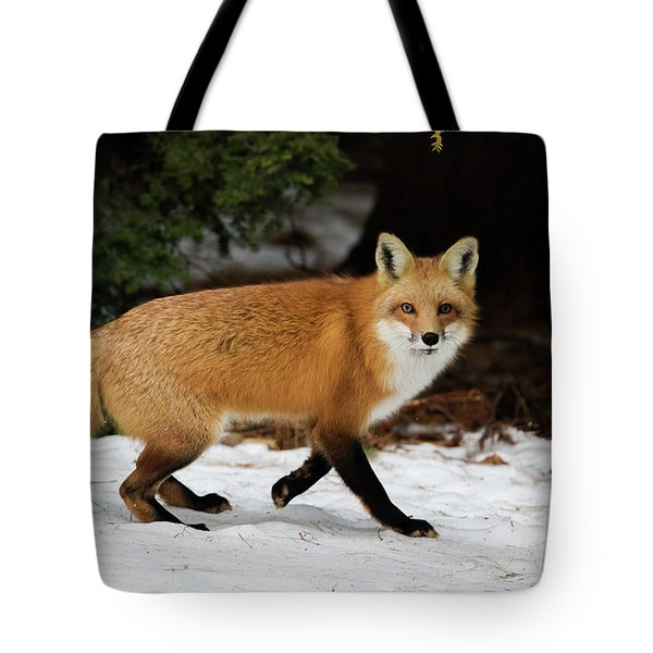 Tote Bag featuring the photograph Mr Fox by Mircea Costina Photography