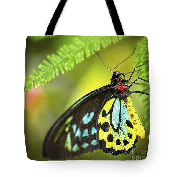 Tote Bag featuring the photograph Mr. Richmond Birdwing by Mary Lou Chmura
