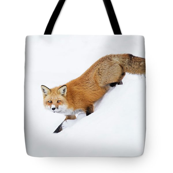 Tote Bag featuring the photograph Mr Sly by Mircea Costina Photography