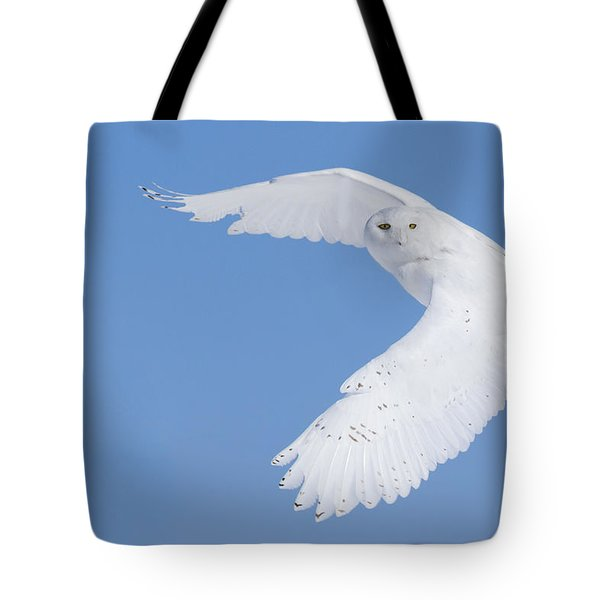 Mr Snowy Owl Tote Bag by Mircea Costina Photography