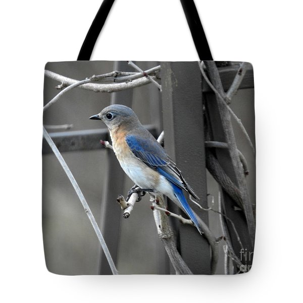 Tote Bag featuring the photograph Mrs. Bluebird by Brenda Bostic