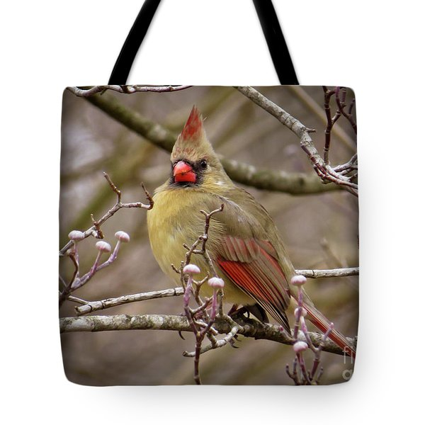 Tote Bag featuring the photograph Mrs Cardinal by Douglas Stucky