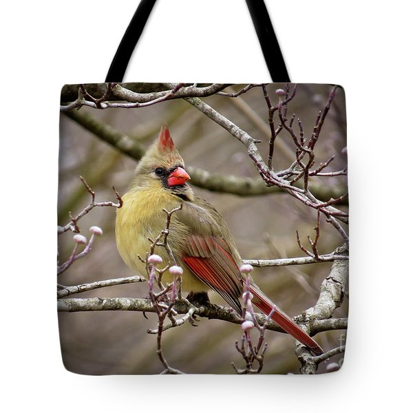Tote Bag featuring the photograph Mrs Cardinal II by Douglas Stucky