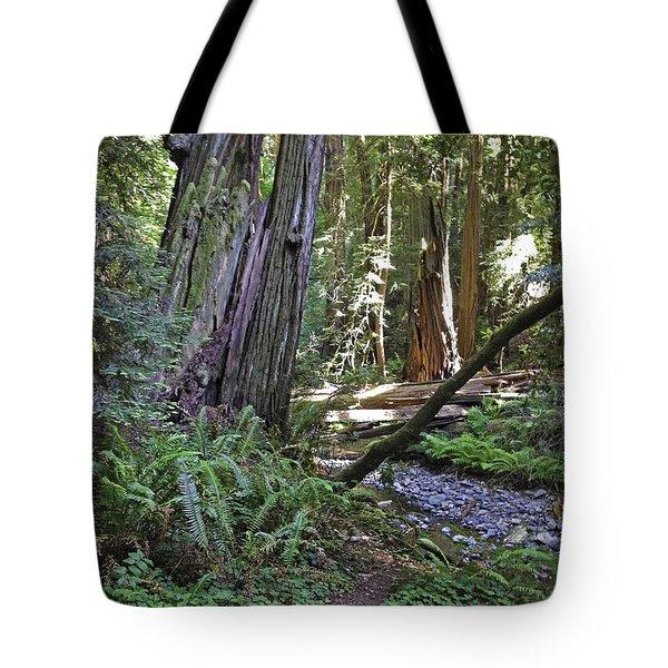 Muir Woods Beauty Tote Bag