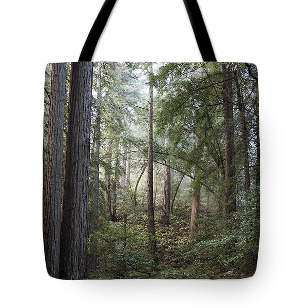 Tote Bag featuring the photograph Muir Woods Tranquility by Sandra Bronstein