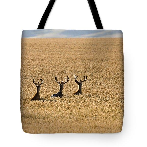 Mule Deer In Wheat Field Tote Bag by Mark Duffy