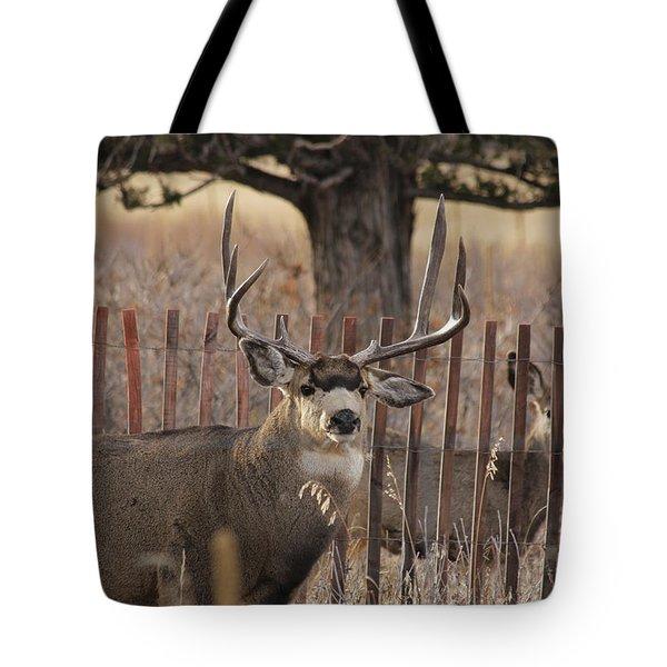 Muledeerbuck8 Tote Bag