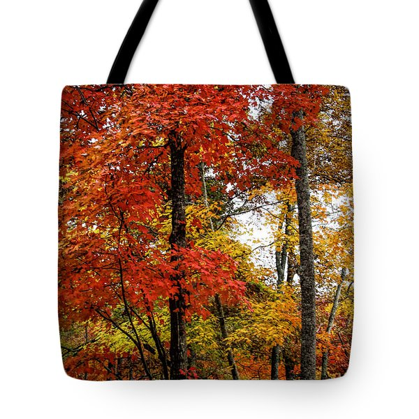 Tote Bag featuring the photograph Multi-colored Leaves by Barbara Bowen