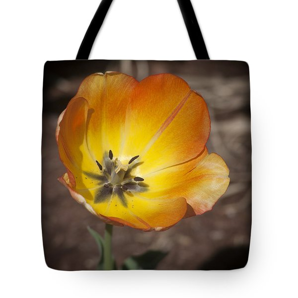 Multihued Tote Bag by Morris  McClung