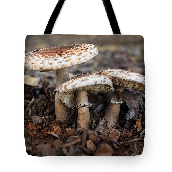 Tote Bag featuring the photograph Mushroom Trio Macrolepiota Procera by Frank Wilson