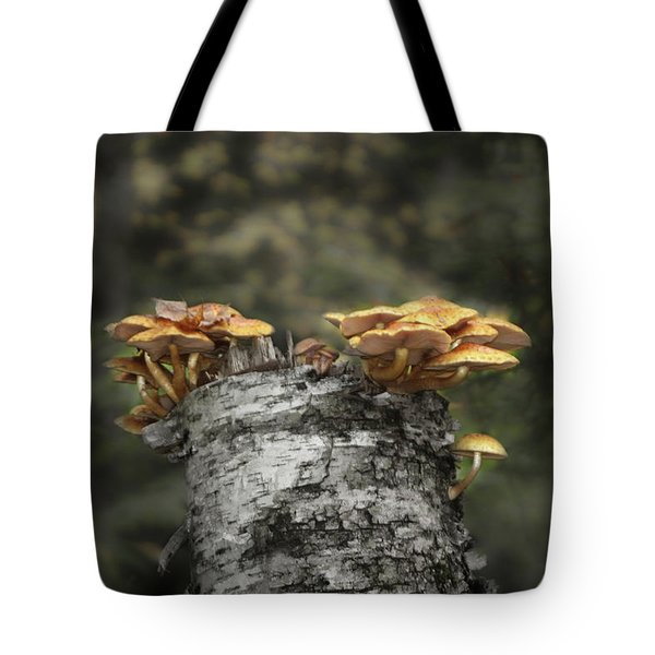 Mushrooms Atop Birch Tote Bag