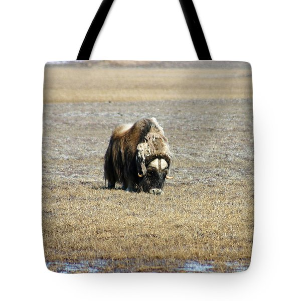 Musk Ox Grazing Tote Bag by Anthony Jones