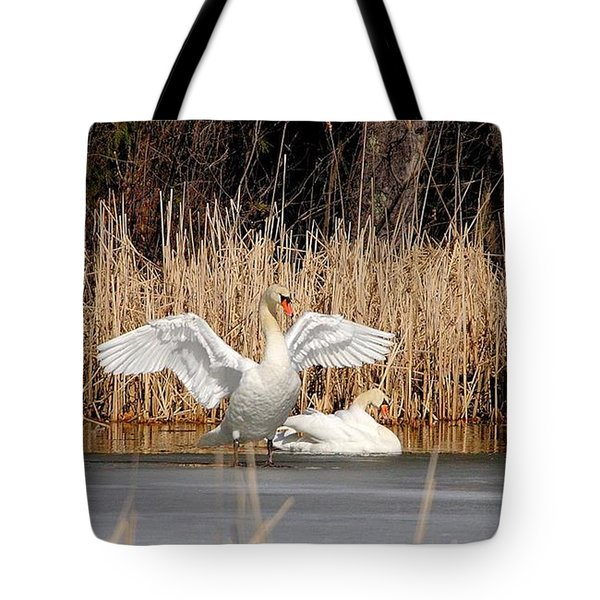 Tote Bag featuring the photograph Spring Arrival Swans by Debbie Stahre