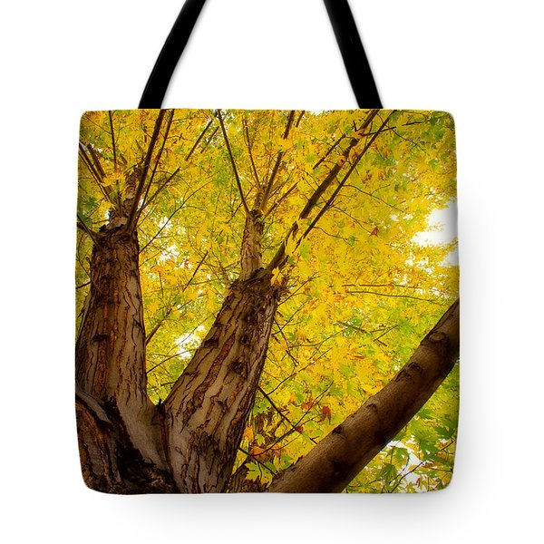 My Maple Tree Tote Bag by James BO  Insogna