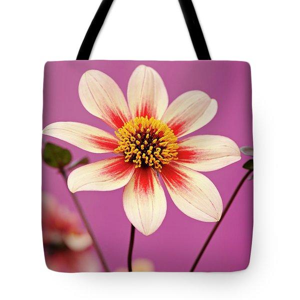 Mystic Dahlia Tote Bag