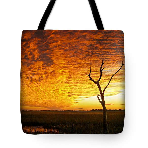 Naked Tree Tote Bag by Phill Doherty