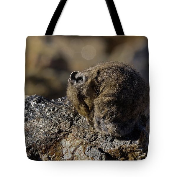 Napping American Pika - 4694 Tote Bag
