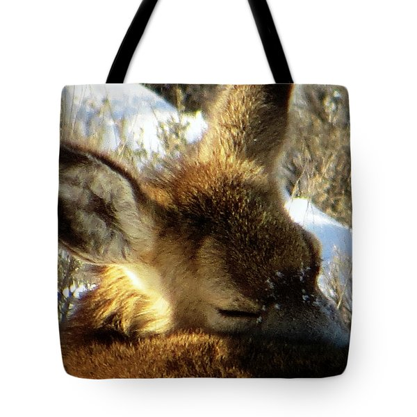 Napping Fawn Tote Bag by Karen Shackles