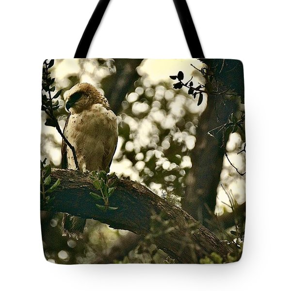 The Golden 'io Hawaiian Hawk Tote Bag by Lehua Pekelo-Stearns