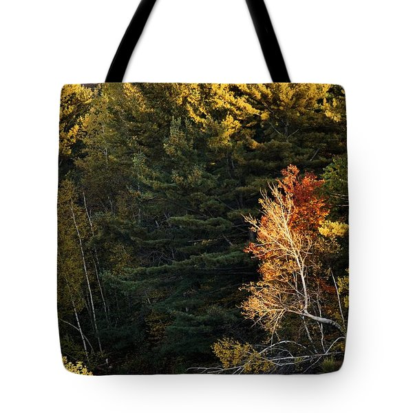 natural Framing Tote Bag by Aimelle
