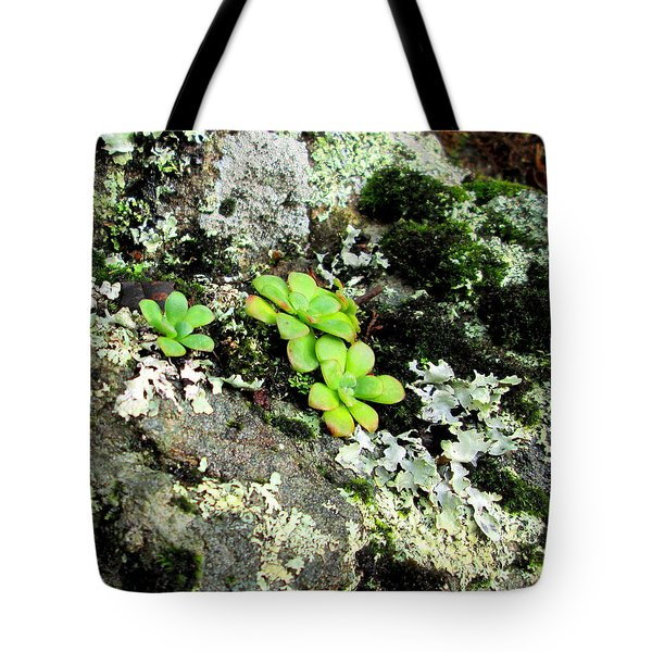 Natural Still Life #3 Tote Bag