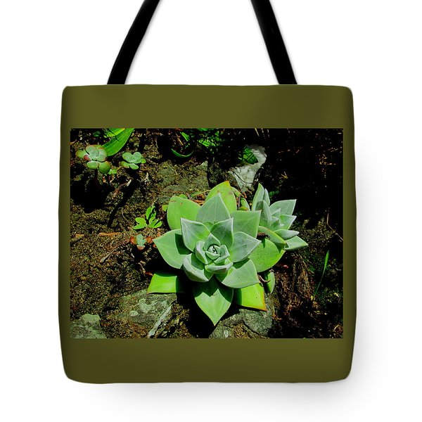 Natural Still Life #9 Tote Bag