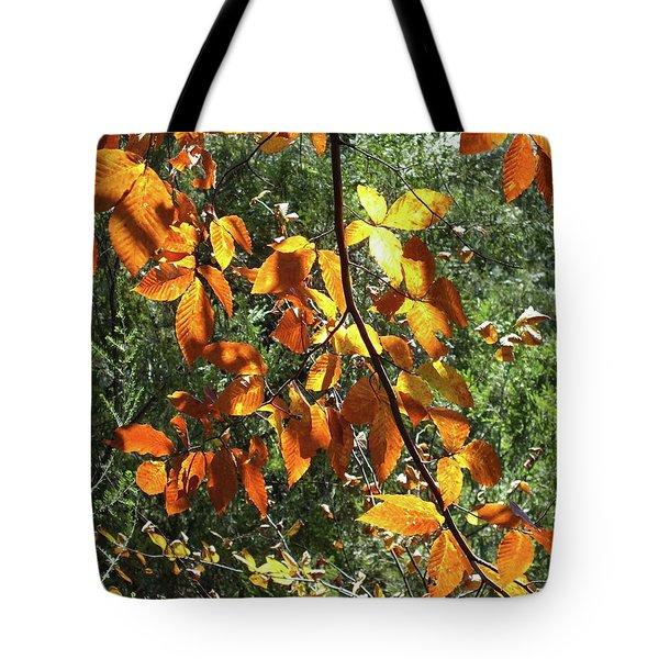 Nature's Finest 2 - Ricketts Glen Tote Bag