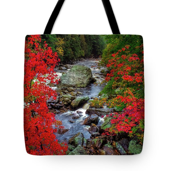 Natures Frame Tote Bag by Mark Papke