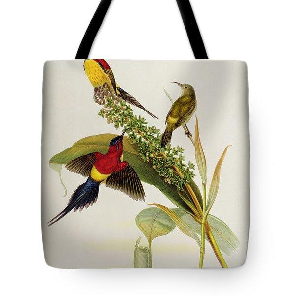 Nectarinia Gouldae Tote Bag