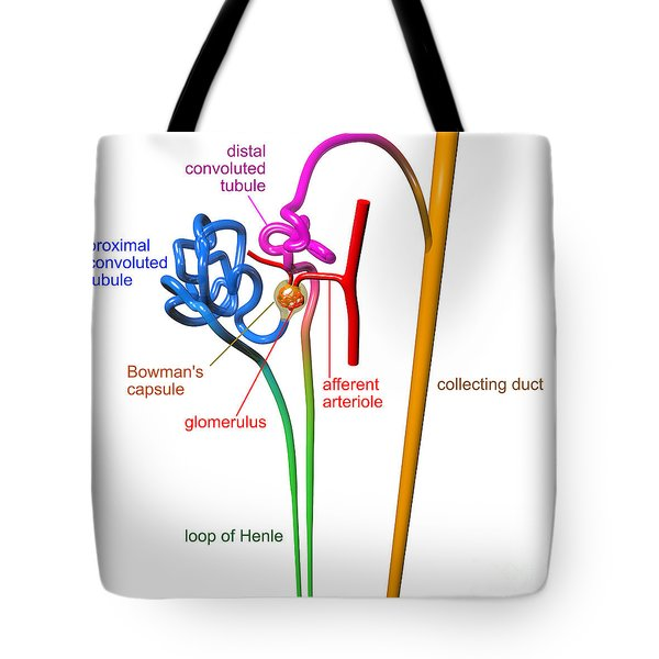 Tote Bag featuring the digital art Nephron White With Labels by Russell Kightley
