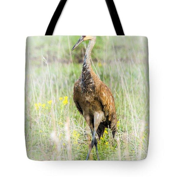 Nesting Sandhill Crane Tote Bag by Daniel Hebard