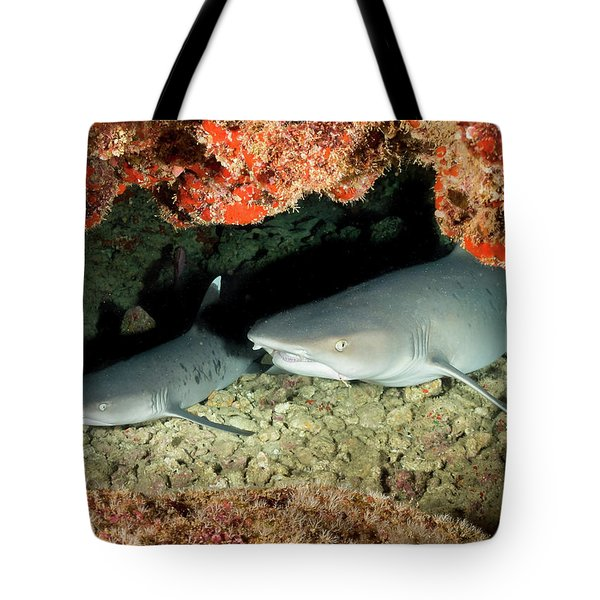 New Baby On The Way.... Tote Bag