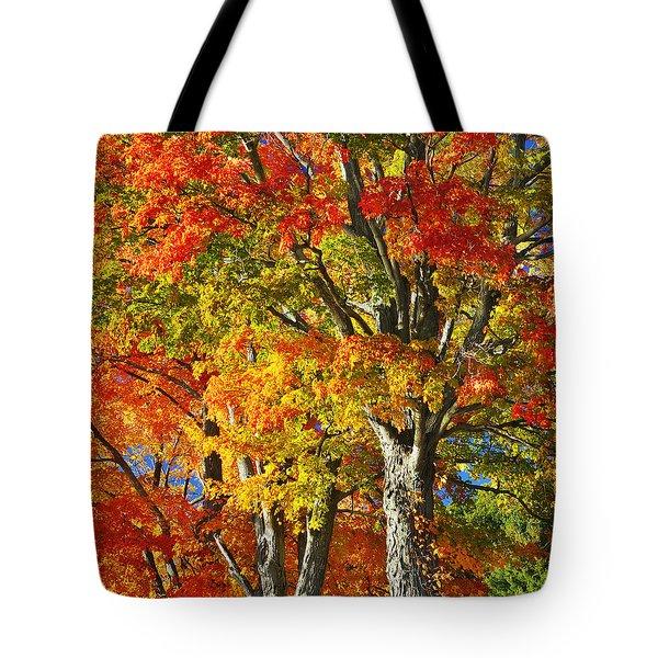 New England Sugar Maples Tote Bag