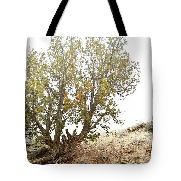 Tote Bag featuring the photograph New Mexico Desert Southwest Tree by Andrea Hazel Ihlefeld