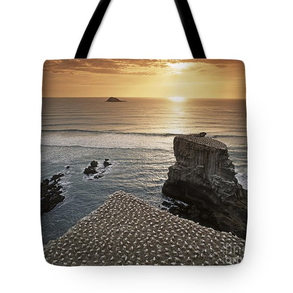 Tote Bag featuring the photograph new zealand gannet colony at muriwai beach ,gannet fly from Muri by Juergen Held