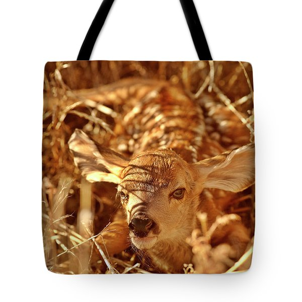 Newborn Fawn Tote Bag by Mark Duffy