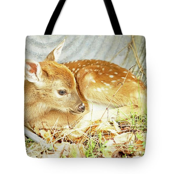 Newborn Fawn Takes Shelter In An Old Washtub Tote Bag