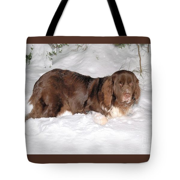Tote Bag featuring the photograph Newf In Snow by Debbie Stahre