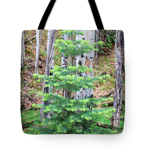 Next Years Christmas Tree Tote Bag by Donna Greene