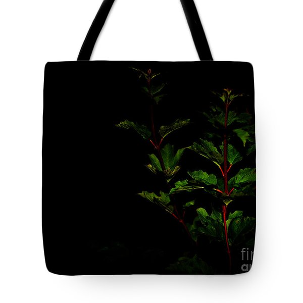 Tote Bag featuring the photograph Night Garden by Linda Shafer