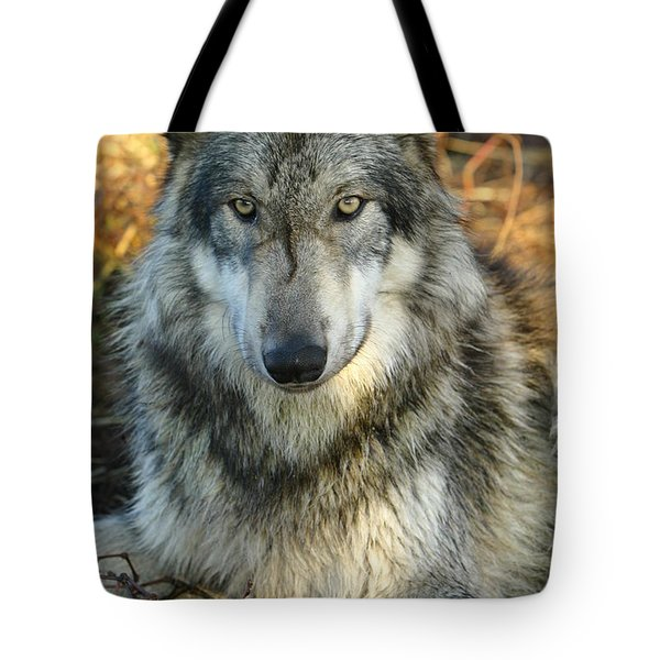Tote Bag featuring the photograph Noble Lupine by Shari Jardina