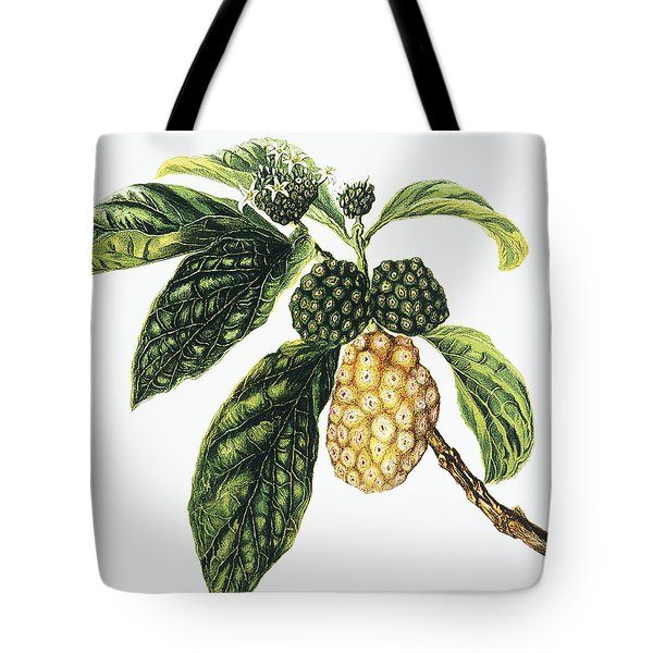 Noni Fruit Tote Bag by Hawaiian Legacy Archive - Printscapes