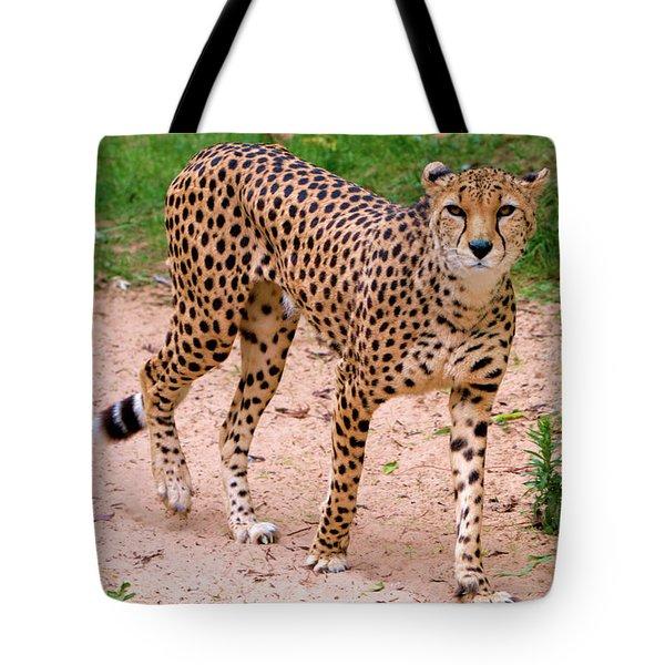 North African Cheetah Tote Bag